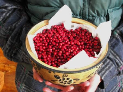 Lowbush Cranberries || Hitchhiking to Heaven