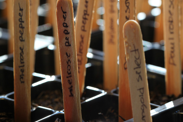 Popsicle Stick Seedling Labels