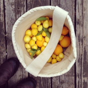 When life gives you limequats (and a few more Meyer…