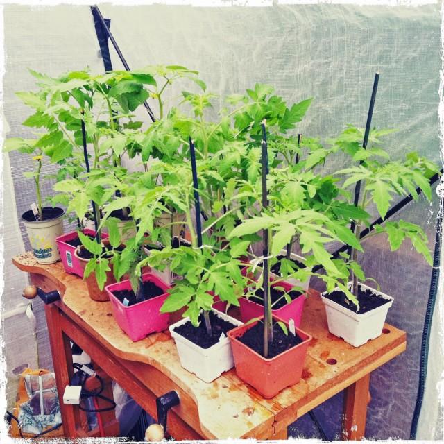 seedlings_no_more