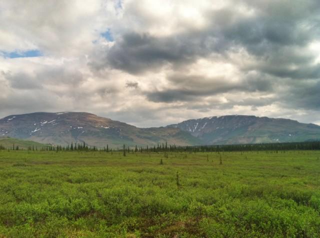 Alaska Taiga Habitat
