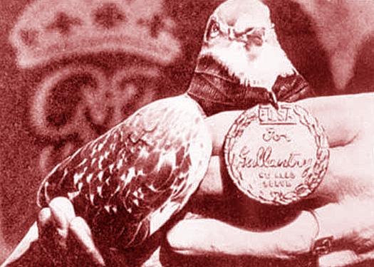 Pigeon Medal of Honor