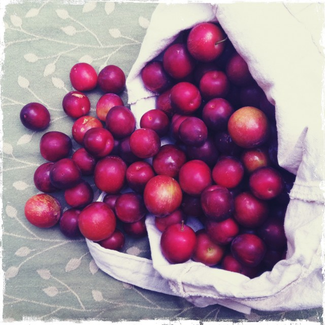 little_red_plums