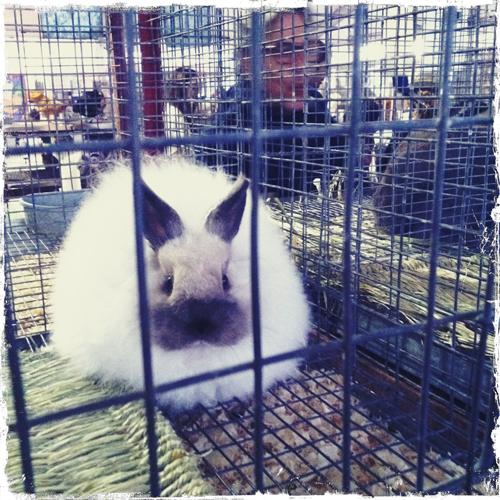 pissy_bunny
