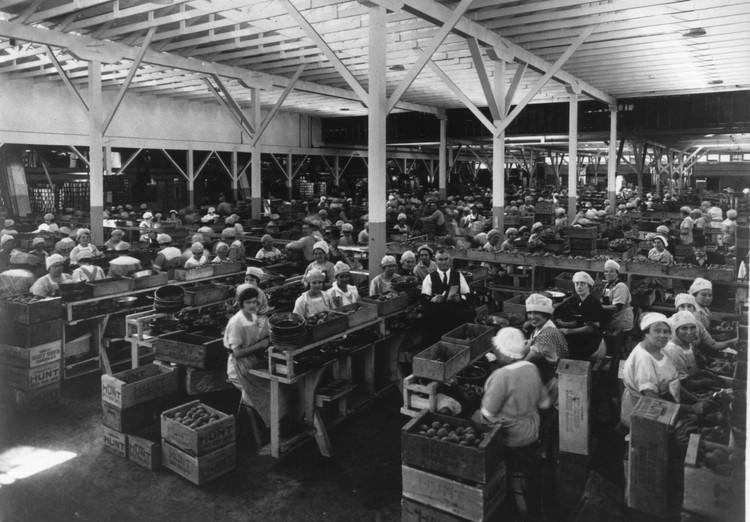 Hayward Cannery 1920