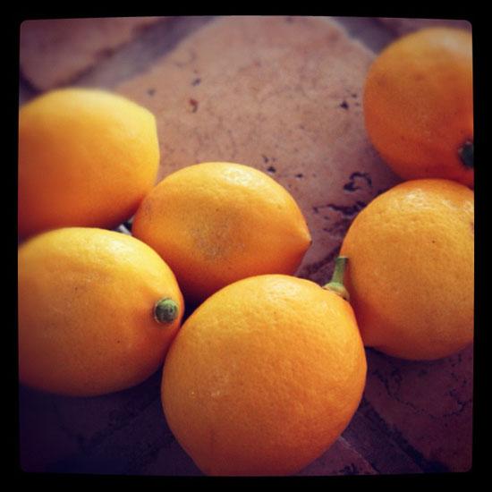 my_meyer_lemons