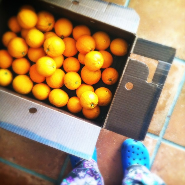 box_of_oranges