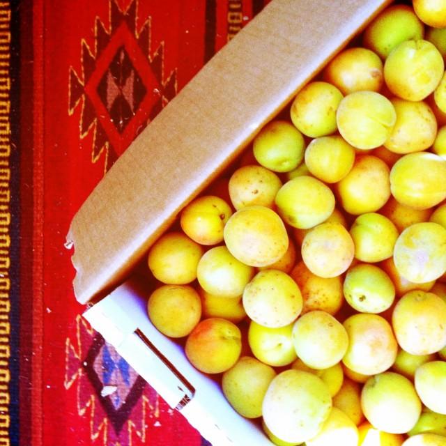 blenheim_apricots