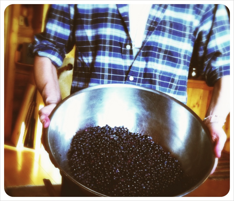 bowl_of_wild_alaskan_blueberries