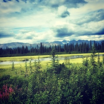 Wild alaska alaskarailroad fairfaxtofairbanks