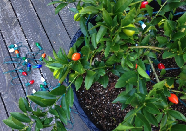 How to Use Christmas Tree Lights to Protect Trees from Freezing and Frosts