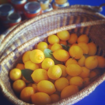 Basket of Meyer Lemons || HItchhiking to Heaven