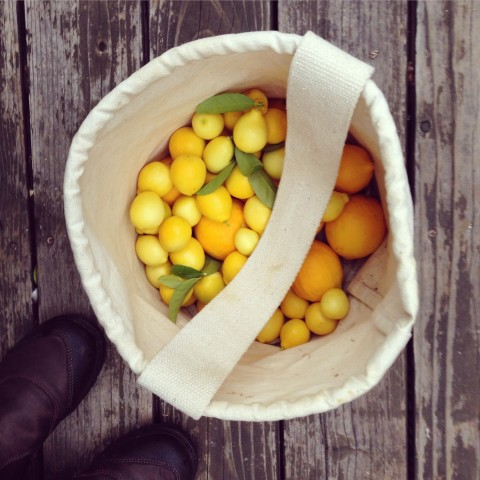 A lot of limequats, a few Meyer lemons