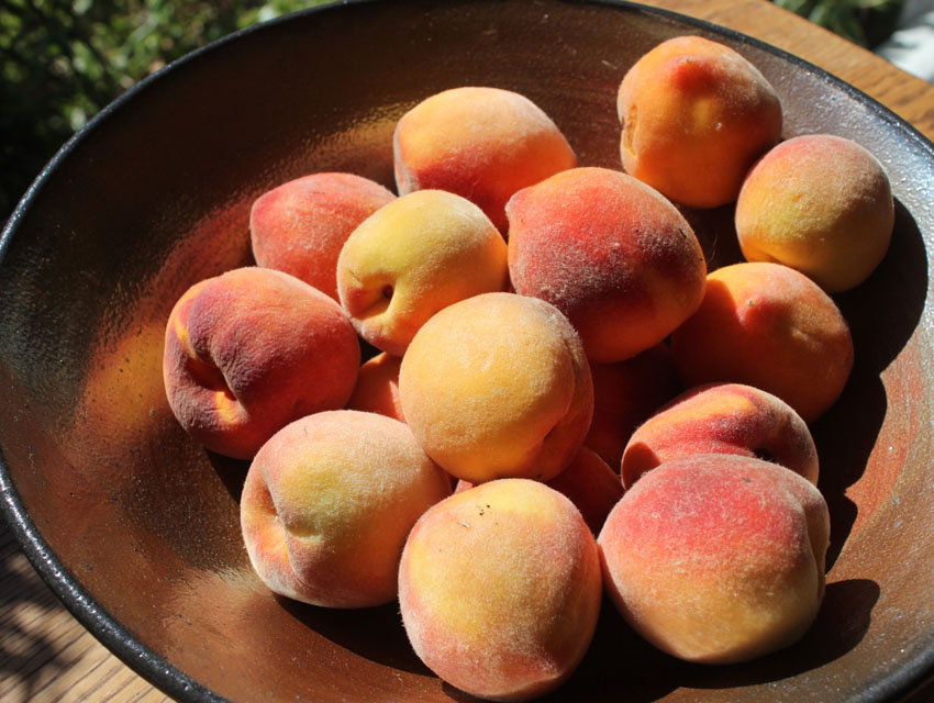 Freshly picked peaches for jam