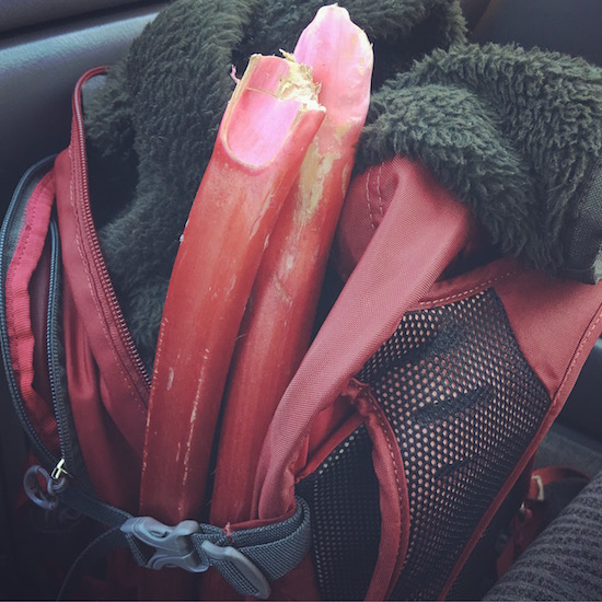 Packing Rhubarb | Hitchhiking to Heaven