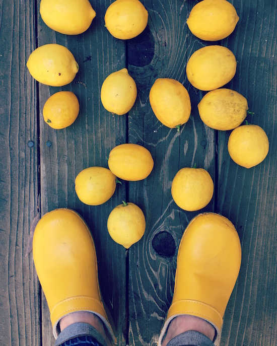 All the Meyer Lemons | Hitchhiking to Heaven